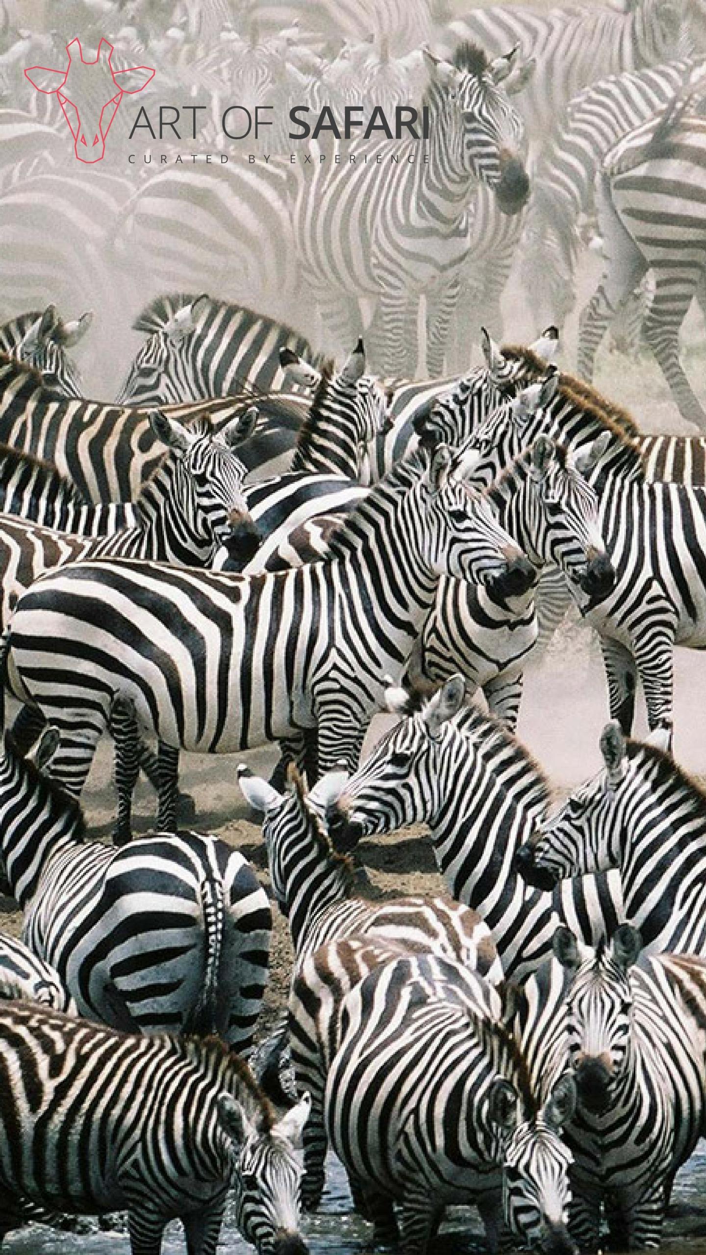 Wallpaper A Dazzle Of Burchell S Zebra In The Dust Art Of Safari