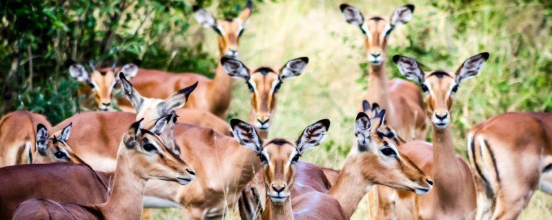 Anya's alter ego: the impala