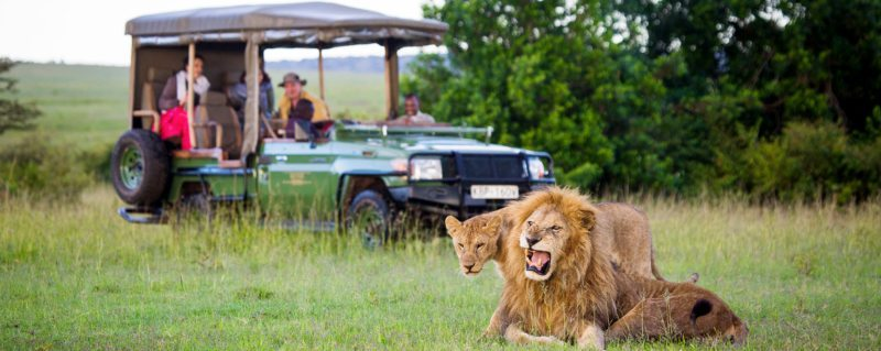 Big-cat lovers will be pleased to know you can find lion while on a Masai Mara safari.