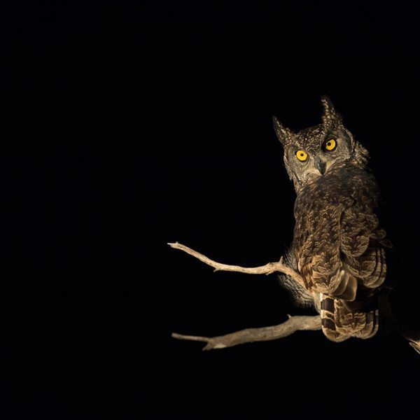 The hooting of owls will be among the sounds of the night you'll hear when sleeping in star beds. © Andrew Schoeman