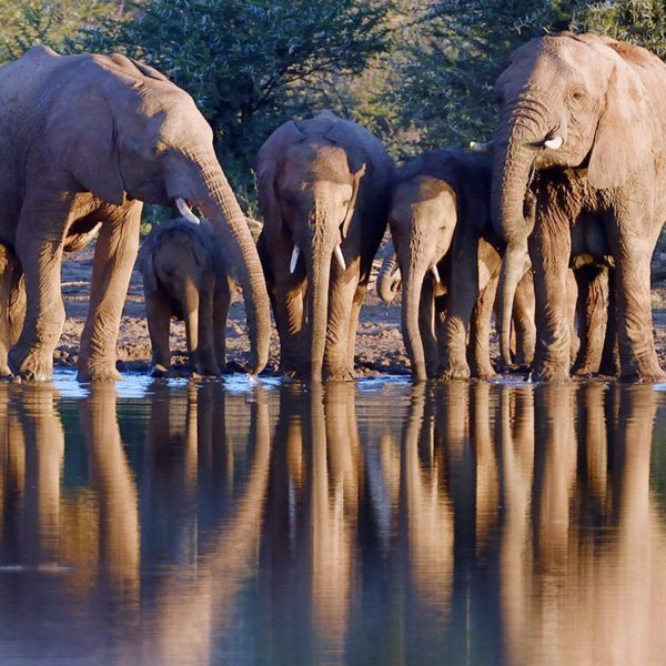 Both ol Donyo Lodge and Loisaba Star Beds have waterholes, where you can see elephant. © Anton Musgrave
