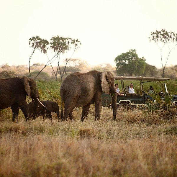 The arid Meru National Park is punctuated by doum palm trees and frequented by herds of elephant, as you'll see on your game drives from Elsa's Kopje Meru. © Elewana Collection