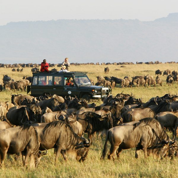 You'll get surrounded by a sea of wildebeest on your game drives during the Great Wildebeest Migration. © Asilia