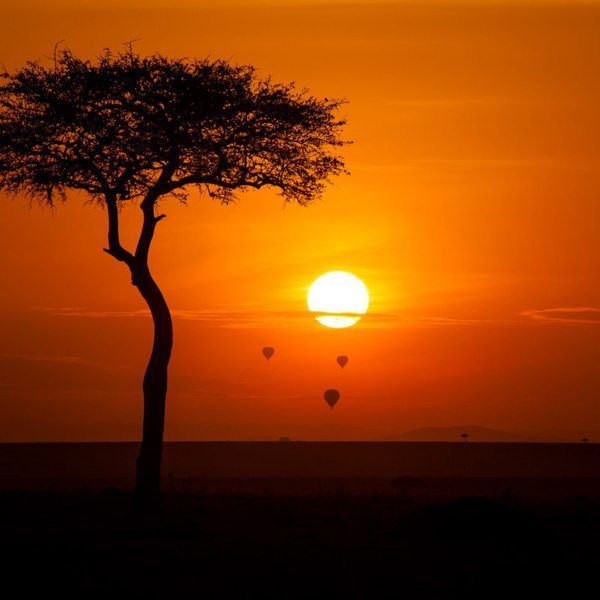 Hot-air balloons always take off in the early morning in the Masai Mara.
