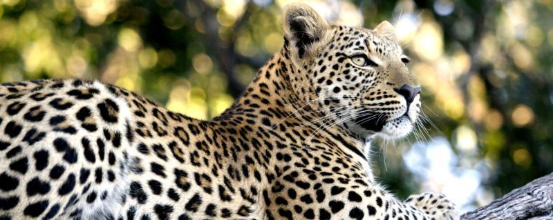You can make a difference to the conservation of Africa's wildlife by coming on safari.