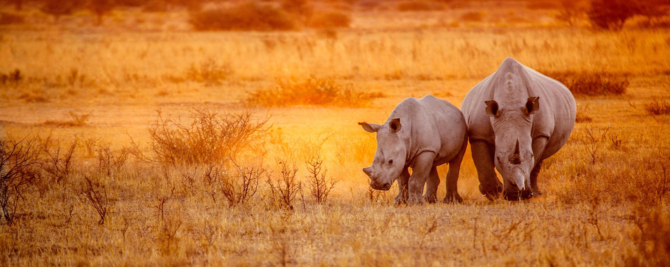 At Art of Safari we carefully curate the conservation initiatives we support.