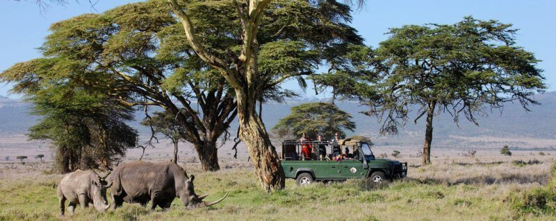 All guests get private safari vehicles at Sirikoi, so you can linger at rhino and other game viewings as long as you choose.