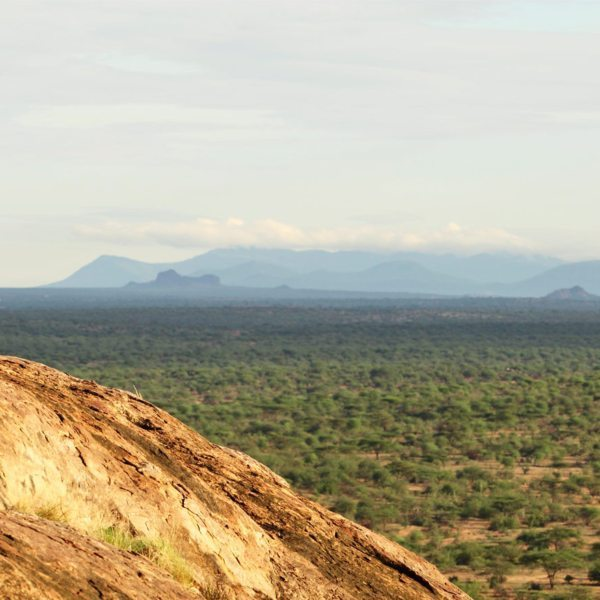 Safari Sundowner | You can explore the surrounds of Sassab on foot during walking safaris.