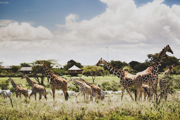 Wildlife, like giraffe and zebra, can often be seen from camp at Segera Retreat. © David Crookes