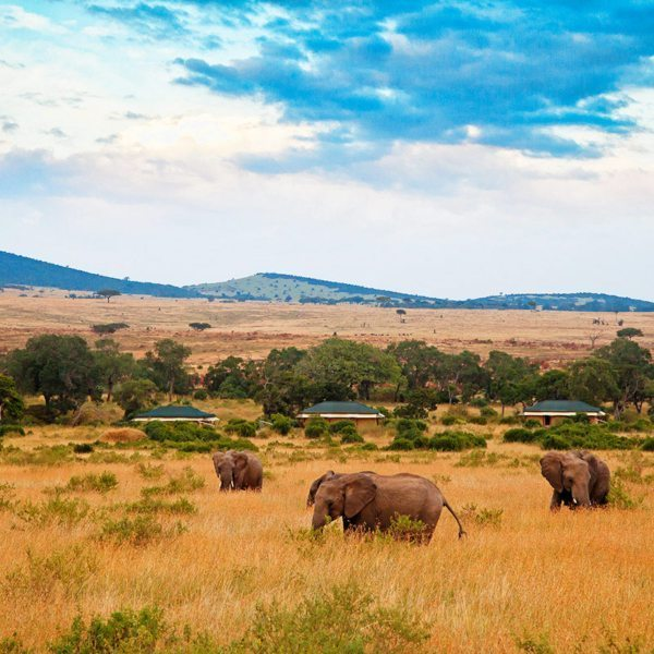Wildlife often pass right by Sand River Masai Mara, like these elephant. © Elewana Collection