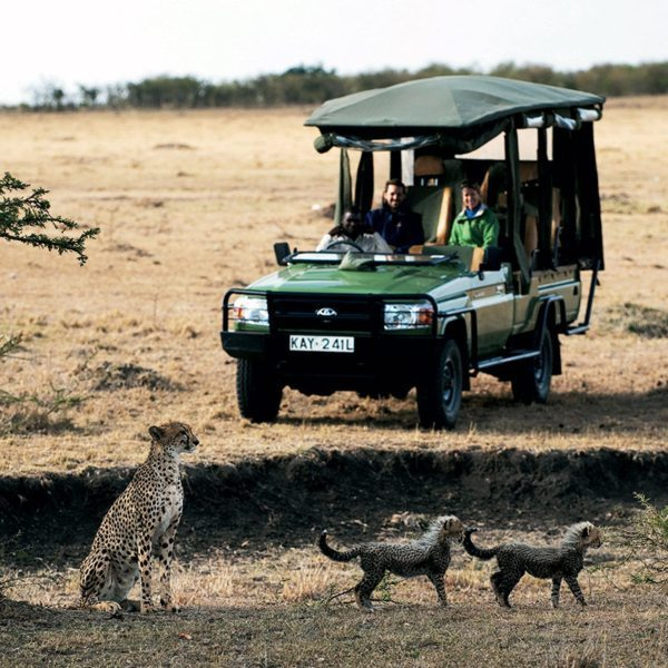 If you get really lucky you might spot a cheetah and her cubs while on a game drive from Mara Plains Camp. © Great Plains Conservation