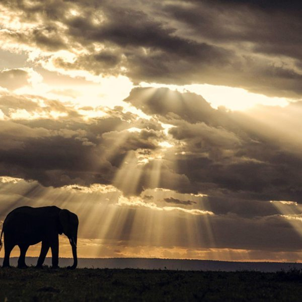 The Masai Mara is home to the gentle elephant, as well as the rest of the Big Five. © Angama Mara