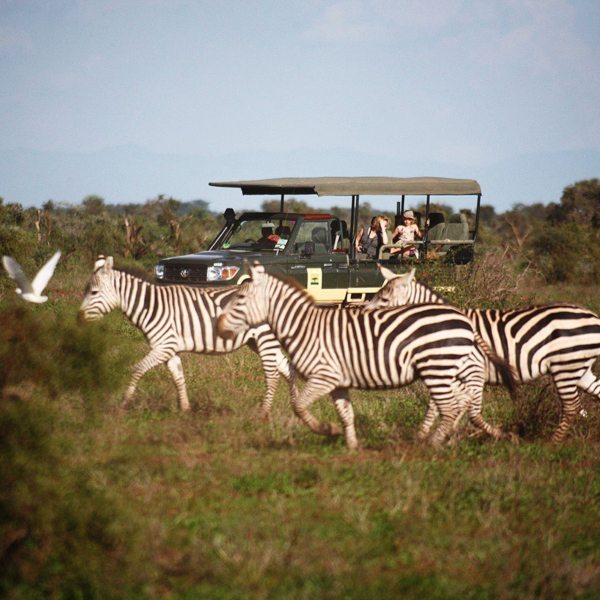 You'll likely see zebra on your game drives when staying at Tortilis Camp Amboseli. © Elewana Collection