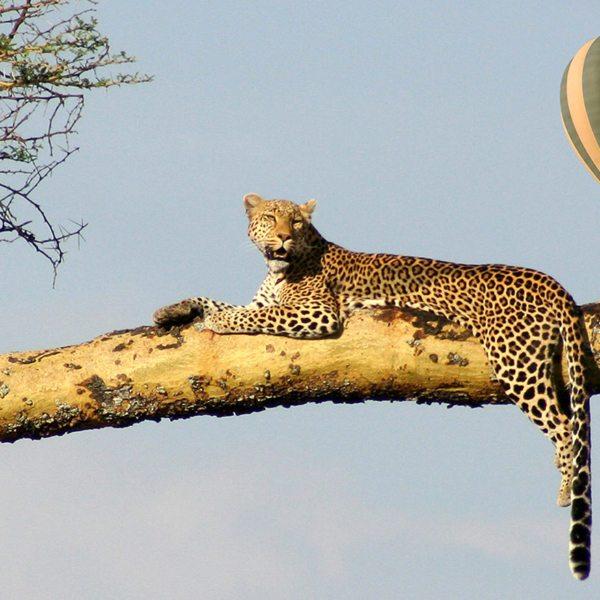 Serengeti Balloon Safaris | Hot-air ballooning is the ultimate African fantasy.