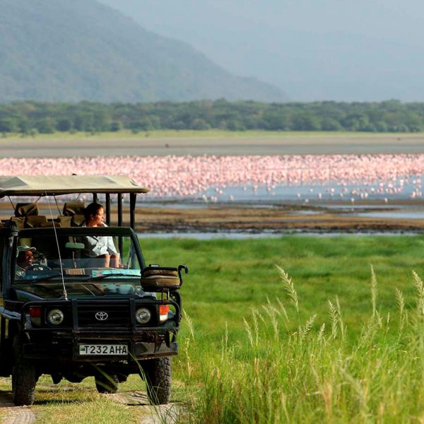 Lake Manyara Safari | At certain times of year, Lake Manyara is covered with pink flamingo.