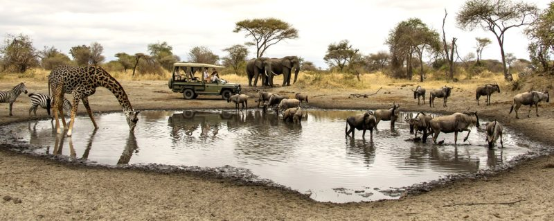 What a sight – zebra, giraffe, elephant and wildebeest all at one waterhole near Little Chem Chem!