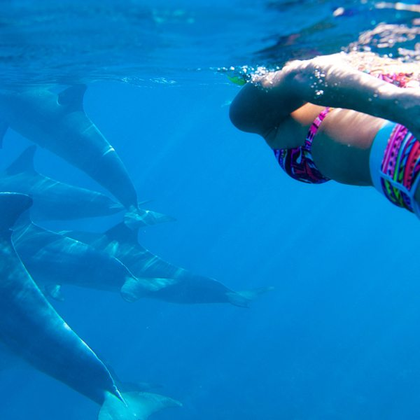 Swim with dolphin | Young woman swiming in the beautiful water on Mauritius island with dolphins