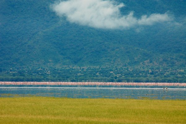 You should definitely go see the Lake Manyara flamingo when staying at Chem Chem Lodge. © Chem Chem Safaris Tanzania