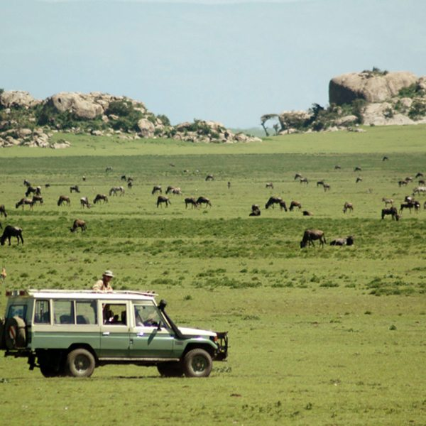 The Great Wildebeest Migration passes right by Lamai Serengeti. © Nomad Tanzania