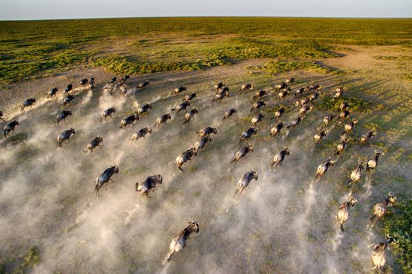 Serengeti Under Canvas moves with the Great Wildebeest Migration. © &Beyond