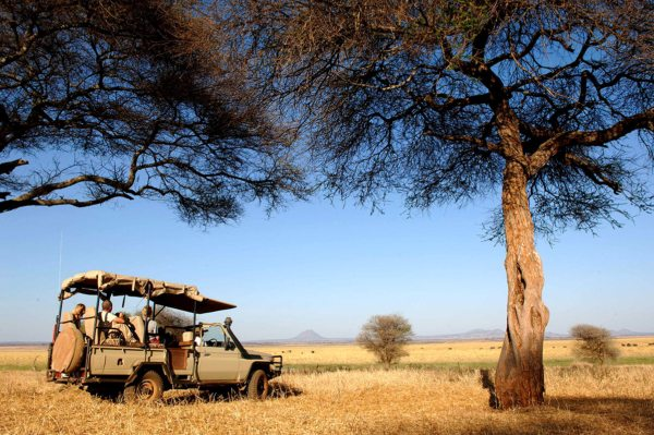 There are lots of opportunities to go on game drives from Kuro Tarangire. © Nomad Tanzania