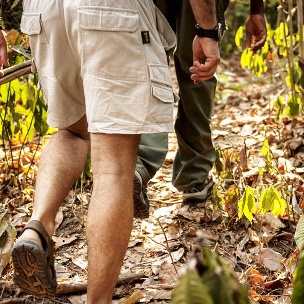 The chimps in Mahale Mountains National Park are wild – be prepared to walk until you find them. © Nomad Tanzania