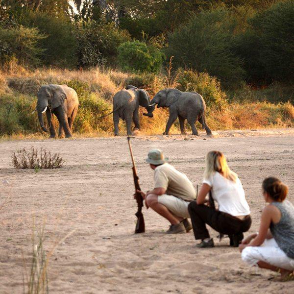 You can see wildlife on foot at Jongomero. © Selous Safari Company
