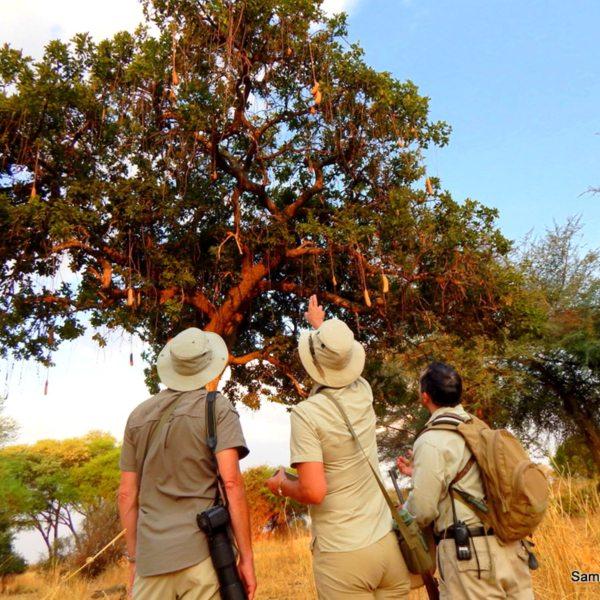 Birders will delight in the birdlife near Jongomero. © Selous Safari Company