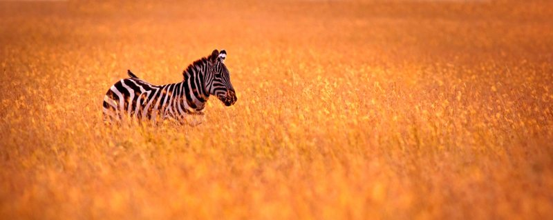 luxury tanzania safari trips