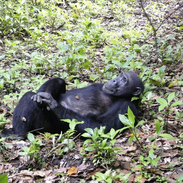 You'll be struck at how human-like the chimps are in Mahale Mountains National Park.