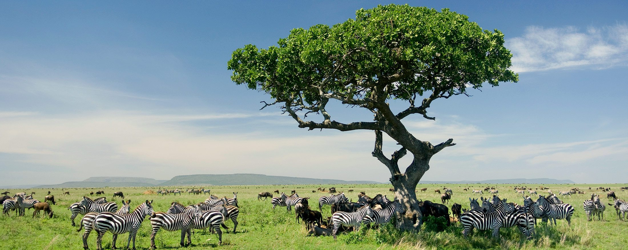 Tanzania is the perfect stage for both epic natural events and intimate shared moments.