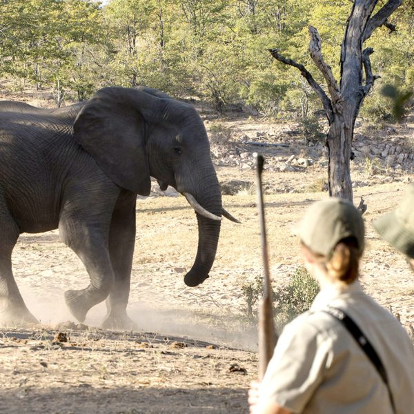 Tracking animals on a Kruger walking safari lets you see wildlife close up.