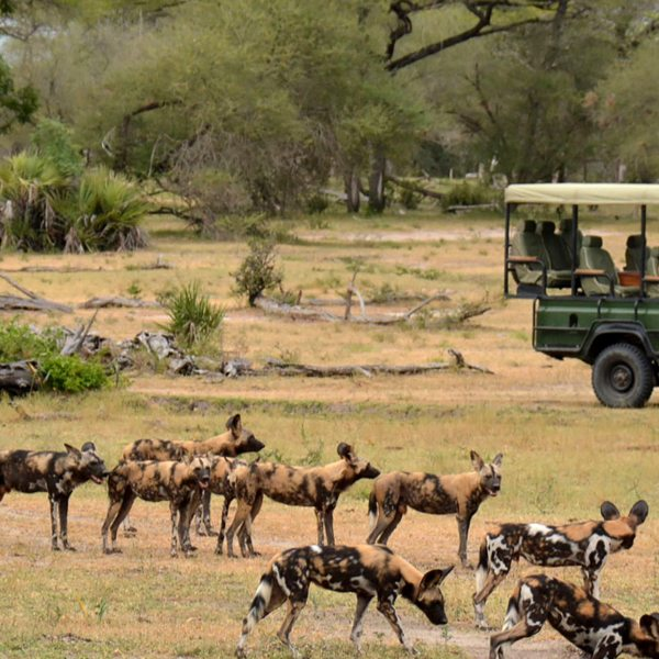 The Selous Game Reserve is home to the continent's largest population of wild dog.