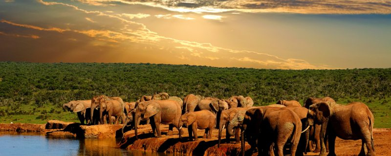 Addo Elephant National Park is home to more than 600 elephant.