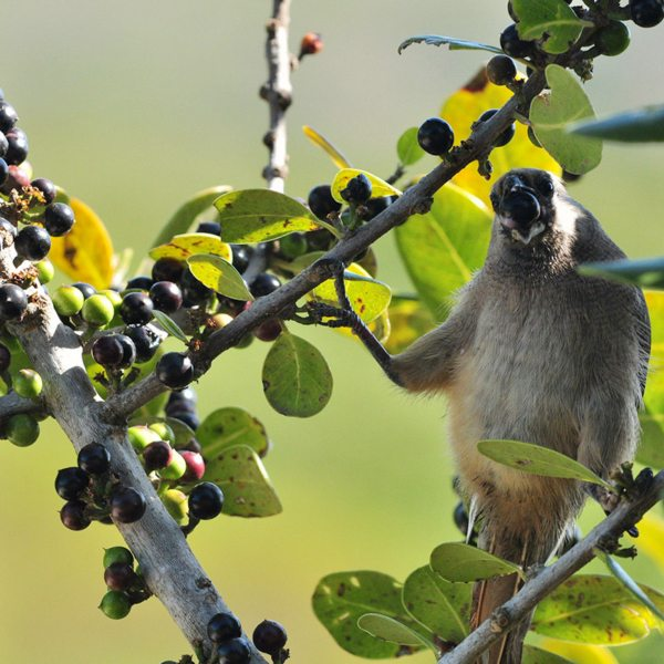 Grootbos Private Nature Reserve has prolific birdlife. © Grootbos Accommodation Enterprises
