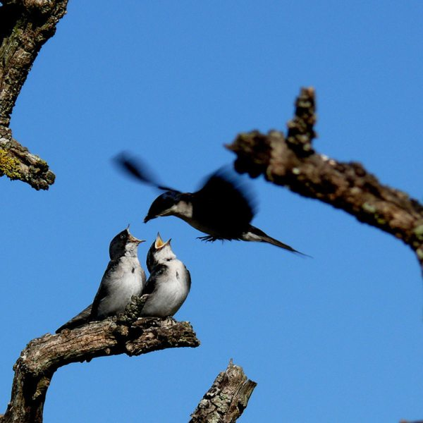 You'll likely see a mama bird feeding her young at Grootbos Private Nature Reserve. © Grootbos Accommodation Enterprises