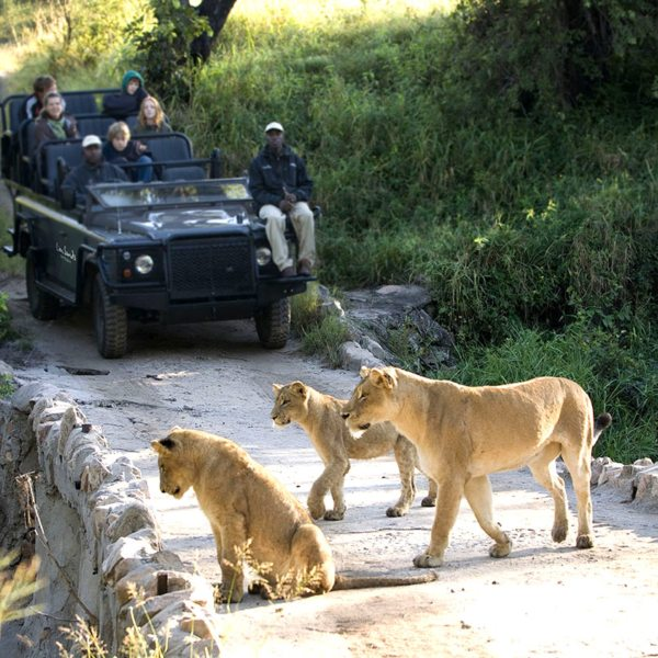 These lion have spotted something in the river in the Greater Kruger. © More Private Travel