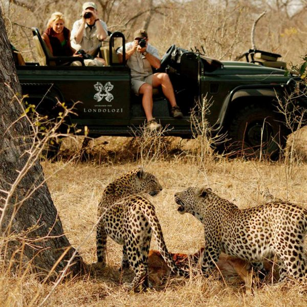 If you're lucky, you might see a leopard kill in the Greater Kruger. © Londolozi