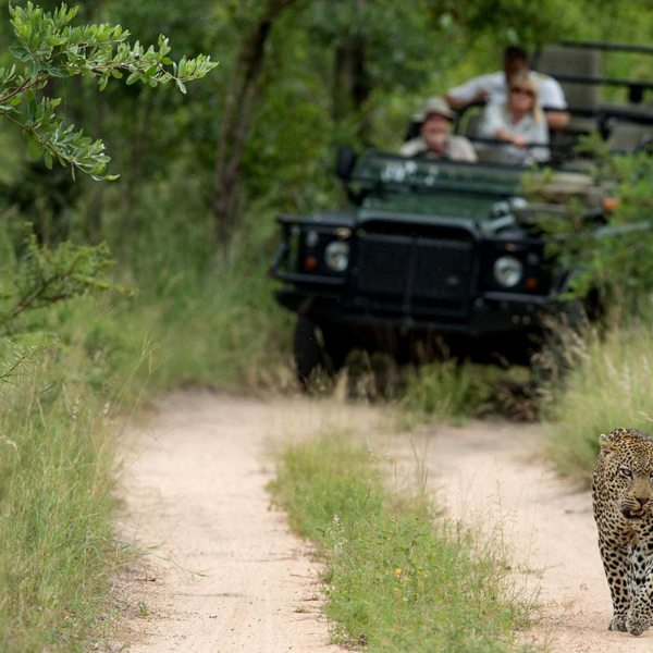Leopard are usually nocturnal, but they're often sighted in the day in the Greater Kruger. © Singita