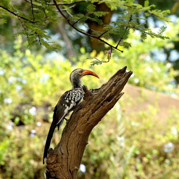 Twitchers will enjoy the birdlife in the Waterberg. © More Private Travel