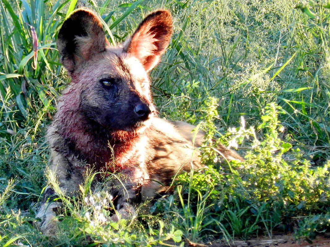 Hunters Choice Dog Food