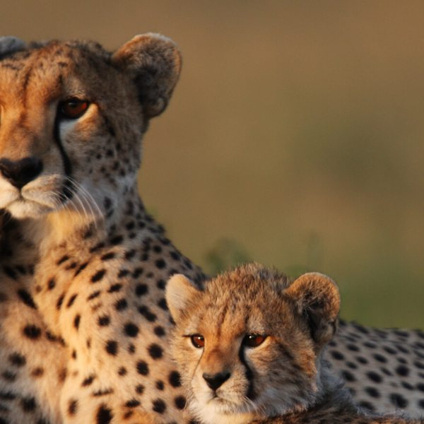 luxury african safari trips
