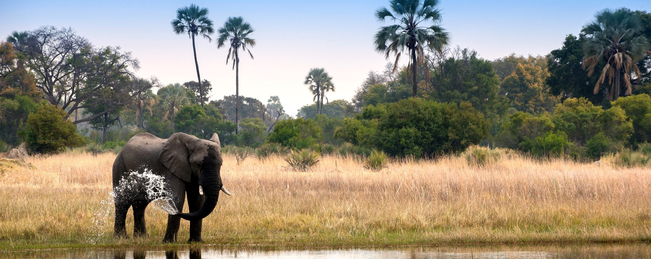 This elephant is cooling itself off in the waters of the Okavango.