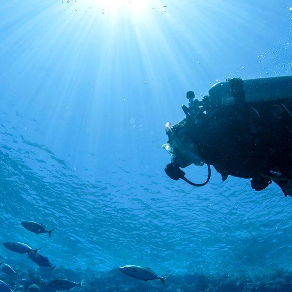 Taking underwater safaris by going scuba diving in Sodwana.