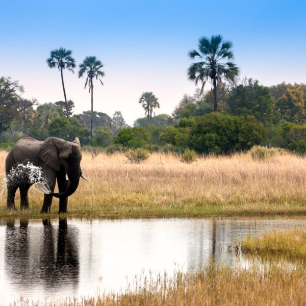 This elephant is cooling itself off in the waters of the Okavango. © &Beyond