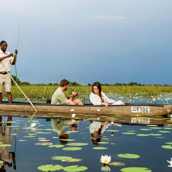 Water lilies can be found all over the Okavango Delta. © Wilderness Safaris