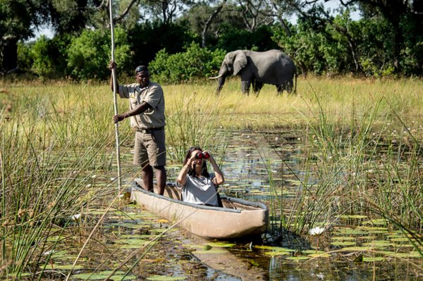 Elephant are common in the Okavango Delta. © Wilderness Safaris