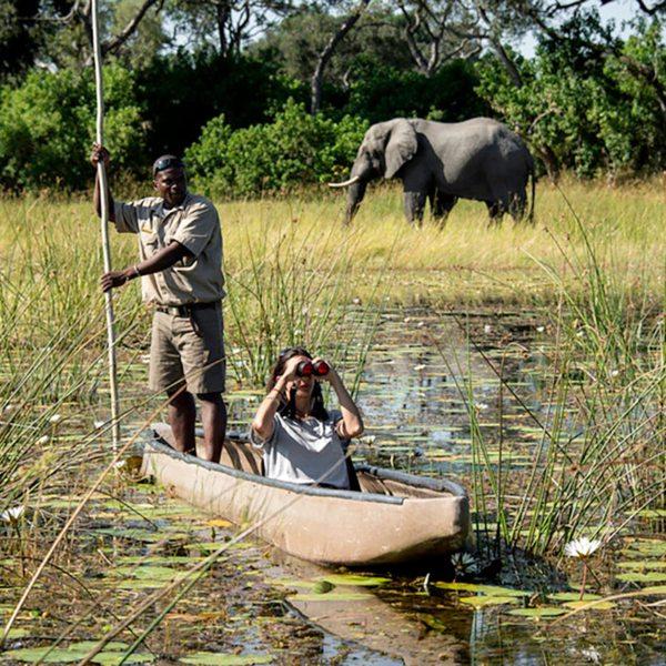 Elephant are common in the Okavango Delta. © Wilderness Safaris