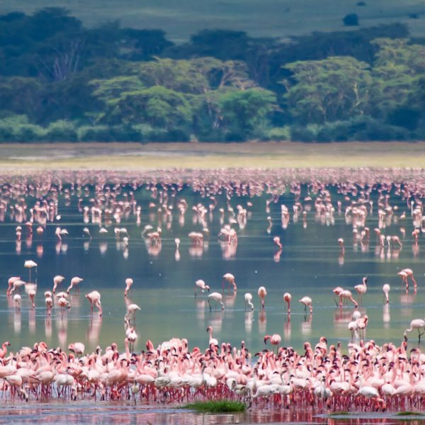 The best time to go on safari in Kenya and Tanzania all depends what you're after.