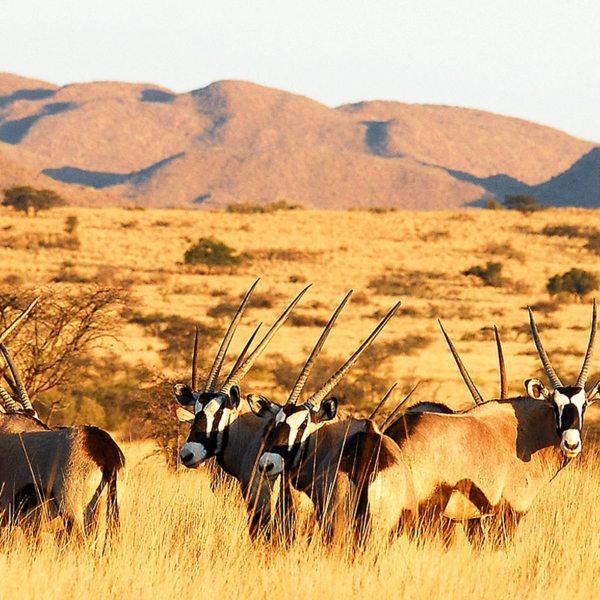 © Tswalu Kalahari